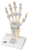 3B Scientific Anatomical Model - hand skeleton with ligaments - Includes 3B Smart Anatomy
