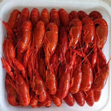 Load image into Gallery viewer, Frozen Whole Cooked Crawfish (1 Bag) - 冷凍西班牙淡水龍蝦仔(1包5磅)