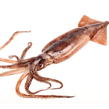 Load image into Gallery viewer, Frozen Whole Round Squid (Yari Ika) - 冷凍真空整隻烏賊 (1包2隻)