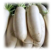 Load image into Gallery viewer, Daikon (2 Pieces)4-5 lb白夢卜