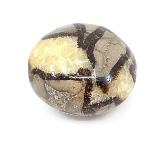 Septarian Polished Hand Piece