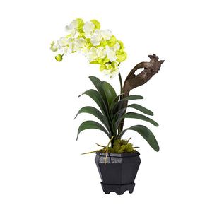 Nearly Natural Home Indoor Decorative Tabletop Vanda With Black Hexagon Vase Silk Arrangement White