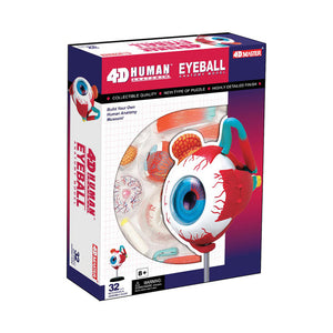 Tedcotoys Human Anatomy - Eyeball