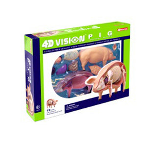 Tedcotoys 4D Vision Pig Anatomy Model