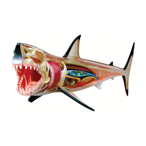 Tedcotoys 4D Vision Great White Shark Anatomy Model