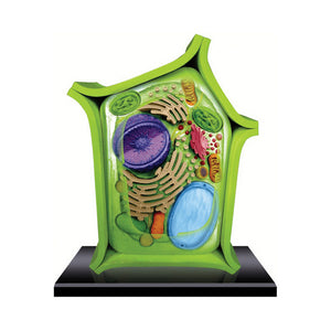 Tedcotoys 4D Science Plant Anatomy Model