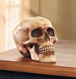 Grinning Highly Realistic Replica Human Skull Statue Home Décor 6.5x4.25x4.6""