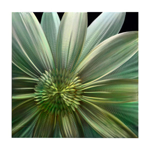 "Aster Single Paneled XL Metal Wall Art 32"" x 32"""