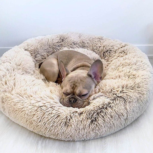 Calming Pet Bed Australia Comfort Pet Beds Anti Anxiety Dog Bed Pet Bed For Dog