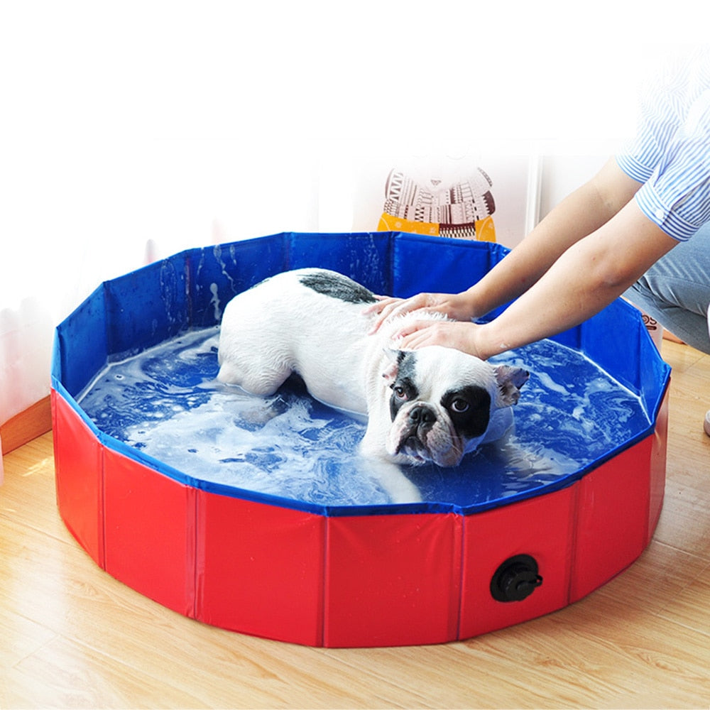 Dog in Foldable Dog Pool