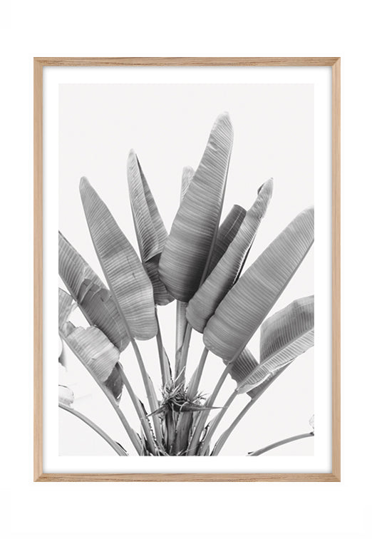 Banana Palm Leaves Portrait