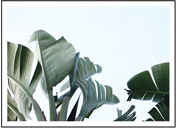 Banana Palm Leaves Colour (PRINT ONLY with border) 50x70cm Clearance