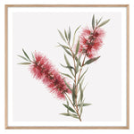 Load image into Gallery viewer, Bottlebrush Squared