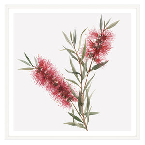 Bottlebrush Squared