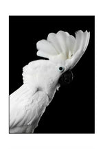 Load image into Gallery viewer, Cockatoo Sunny