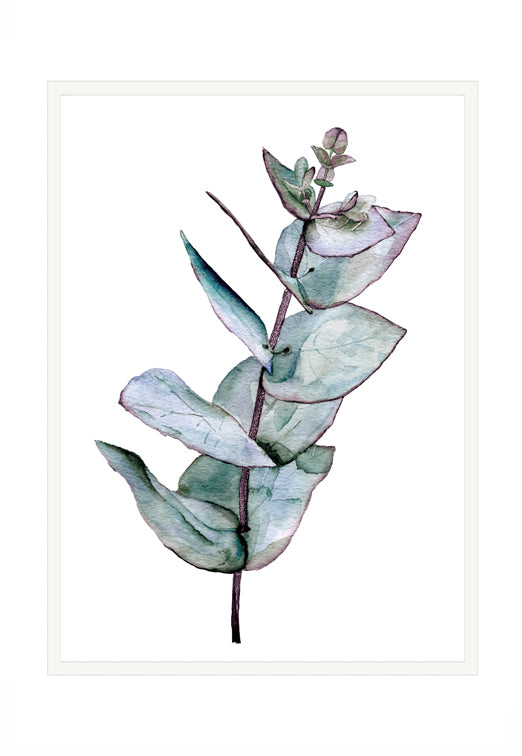 Eucalyptus 1 - IN STORE ONLY