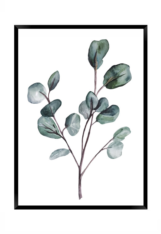 Eucalyptus 2 - IN STORE ONLY