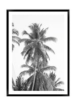 Load image into Gallery viewer, Miami Palms Mono