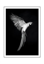 Load image into Gallery viewer, Parrot Charlie MONO (CHOOSE FRAME COLOUR) 65x90cm CLEARANCE