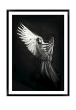 Load image into Gallery viewer, Parrot Paco MONO (CHOOSE FRAME COLOUR) 65x90cm CLEARANCE