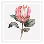 Load image into Gallery viewer, Protea Squared