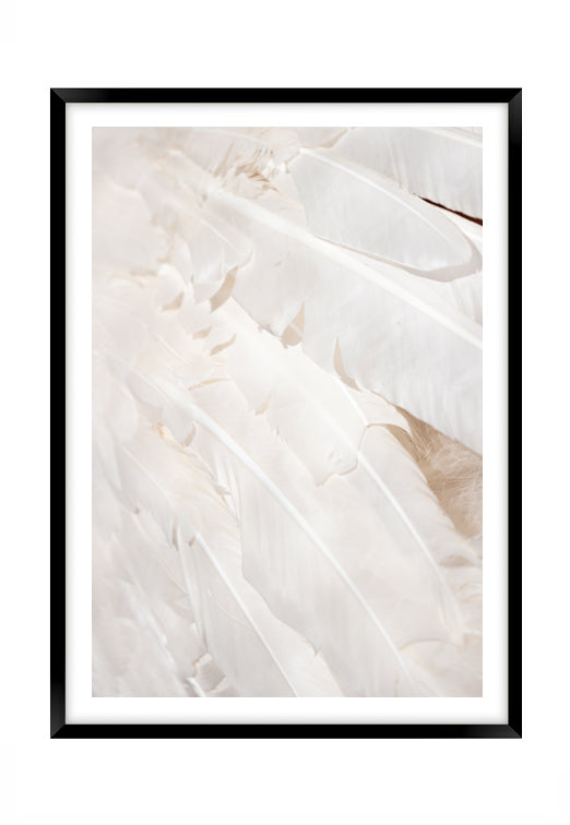 White Feather Dream 2