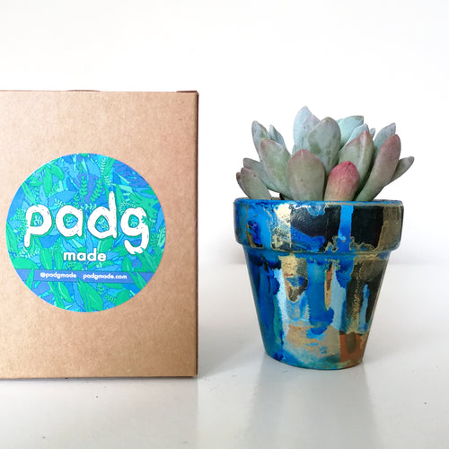Succulent and padg pot - padgmade