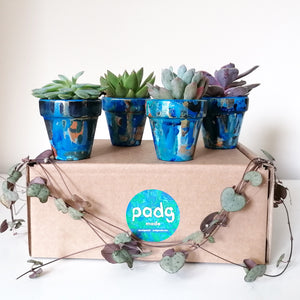 Succulent and padg pot - quadruplets - padgmade