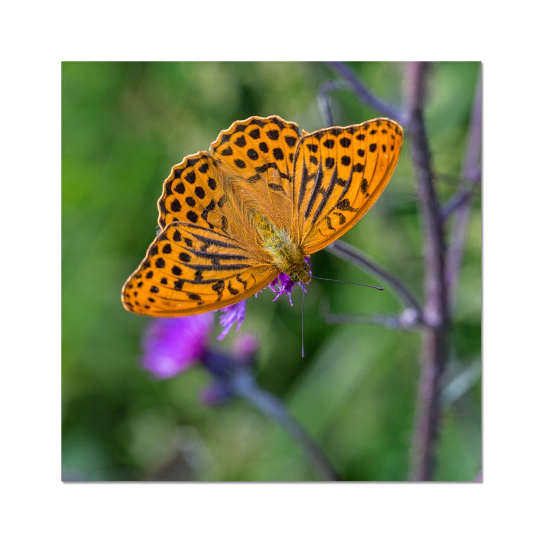 Butterfly Photo Art Print