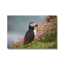 Load image into Gallery viewer, Puffin Canvas