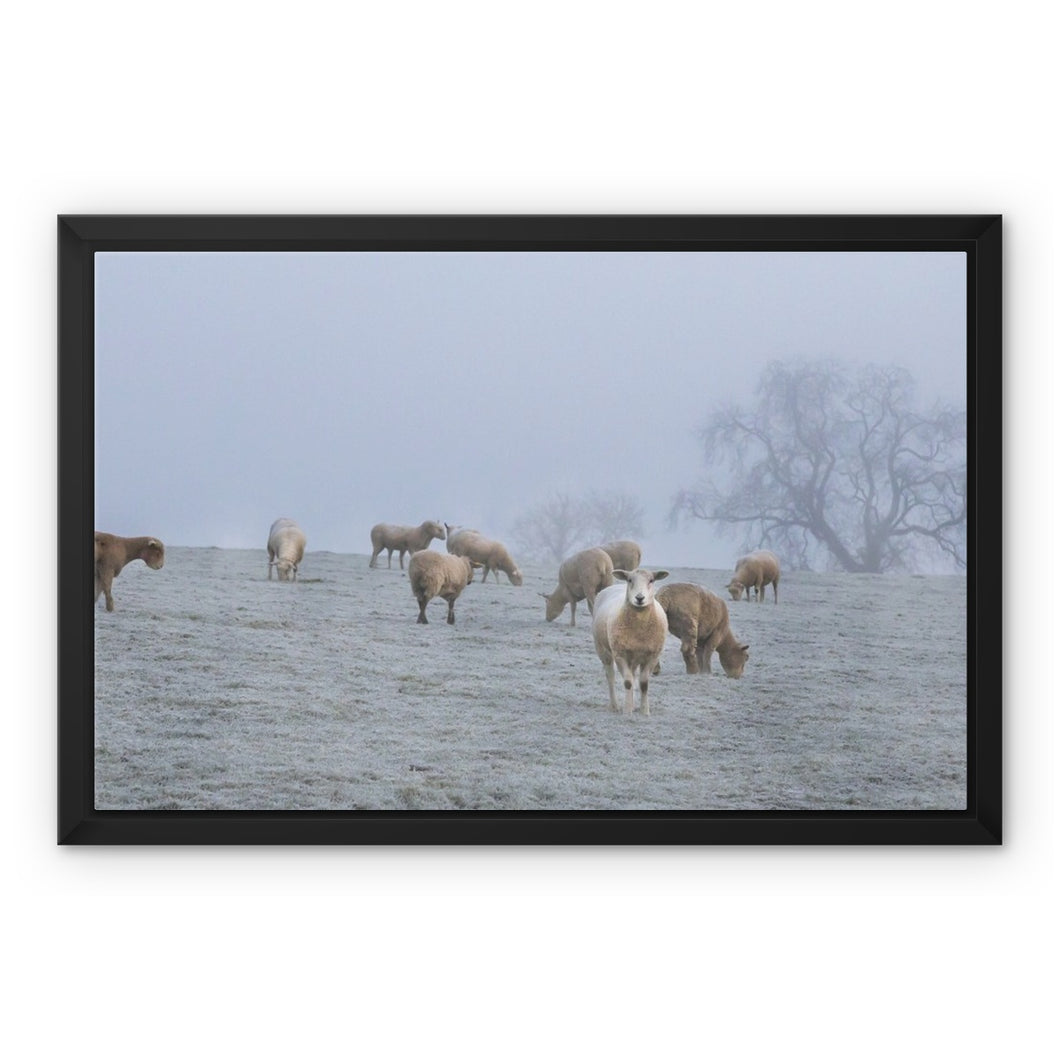 Newgrange Sheep Framed Canvas