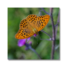 Load image into Gallery viewer, Butterfly Canvas