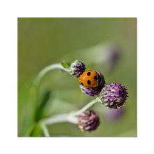 Load image into Gallery viewer, Ladybug Fine Art Print