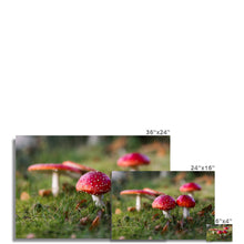 Load image into Gallery viewer, Fly Agaric Photo Art Print