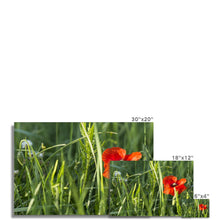 Load image into Gallery viewer, Poppy Photo Art Print