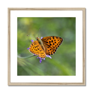 Butterfly Framed & Mounted Print