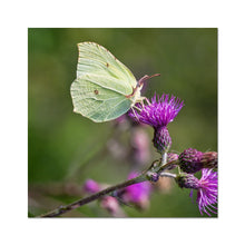 Load image into Gallery viewer, Nectar Lunch Fine Art Print