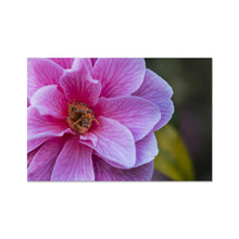 Load image into Gallery viewer, Flower Photo Art Print