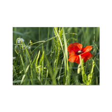 Load image into Gallery viewer, Poppy Fine Art Print