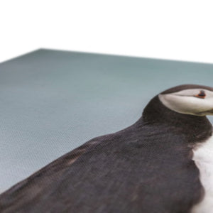 Puffin Canvas