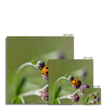 Load image into Gallery viewer, Ladybug Photo Art Print
