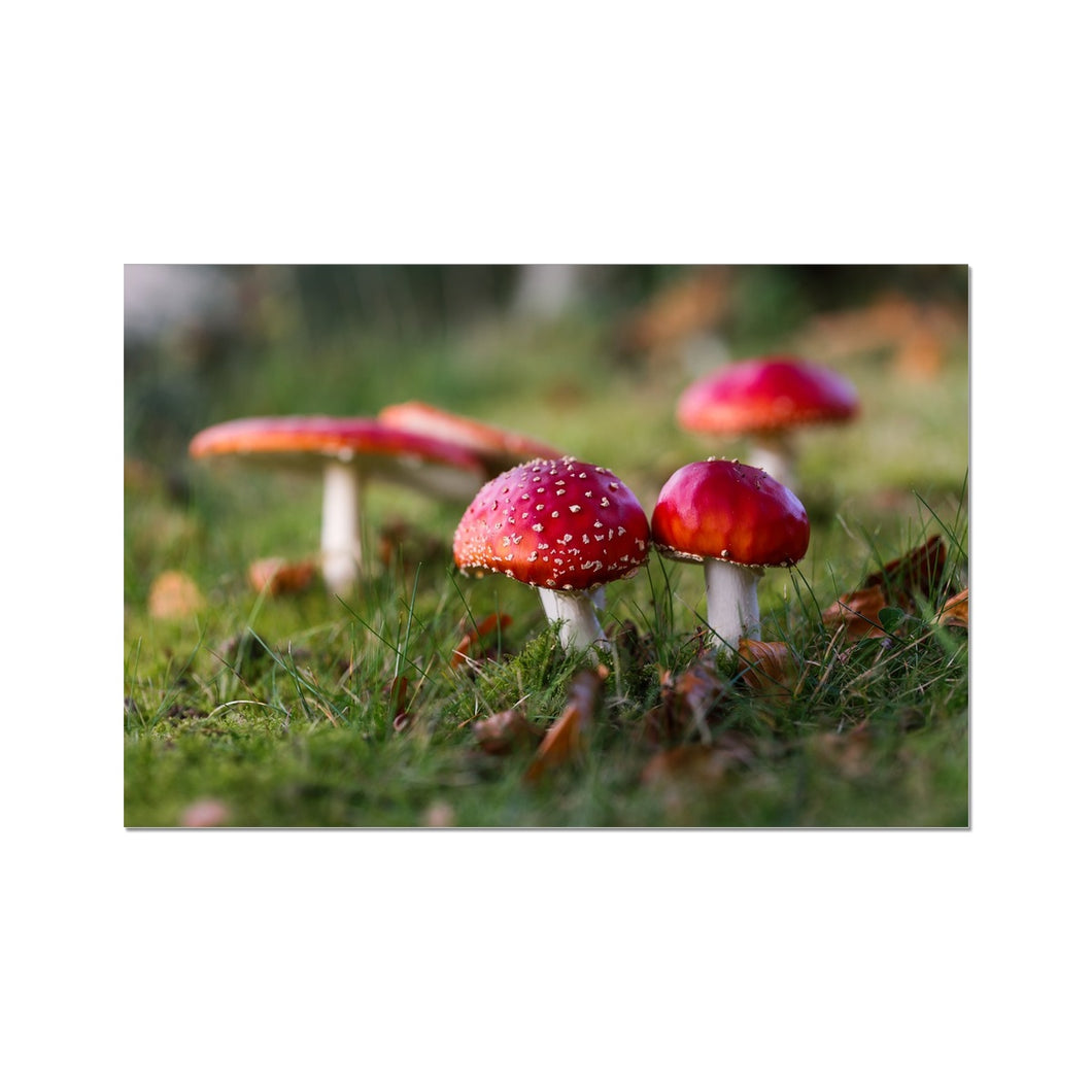 Fly Agaric Photo Art Print