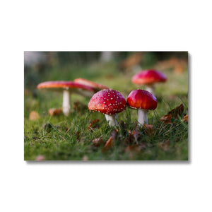 Fly Agaric Canvas