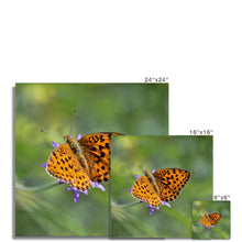 Load image into Gallery viewer, Butterfly Hahnemühle Photo Rag Print