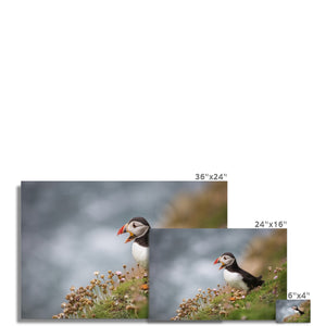 Puffin Photo Art Print
