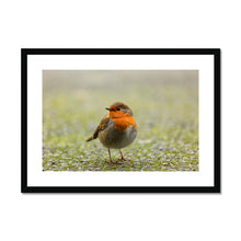 Load image into Gallery viewer, Robin Framed & Mounted Print