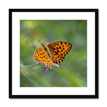 Load image into Gallery viewer, Butterfly Framed & Mounted Print