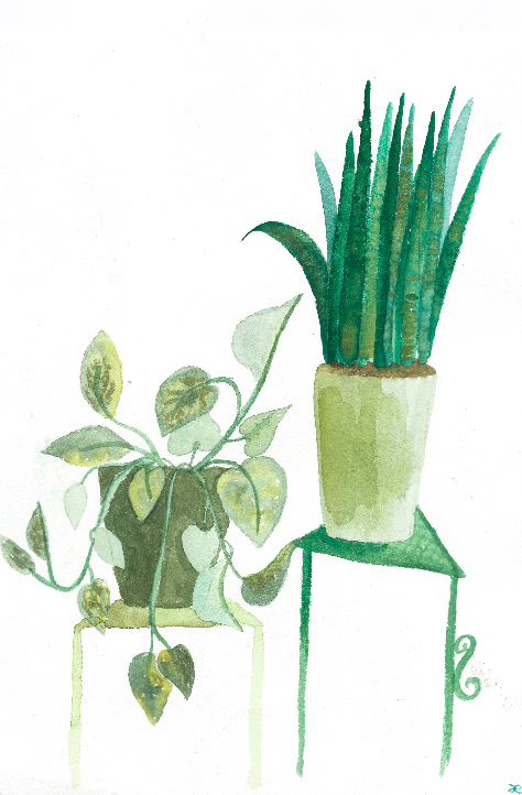 Watercolor print: Indoor Plants