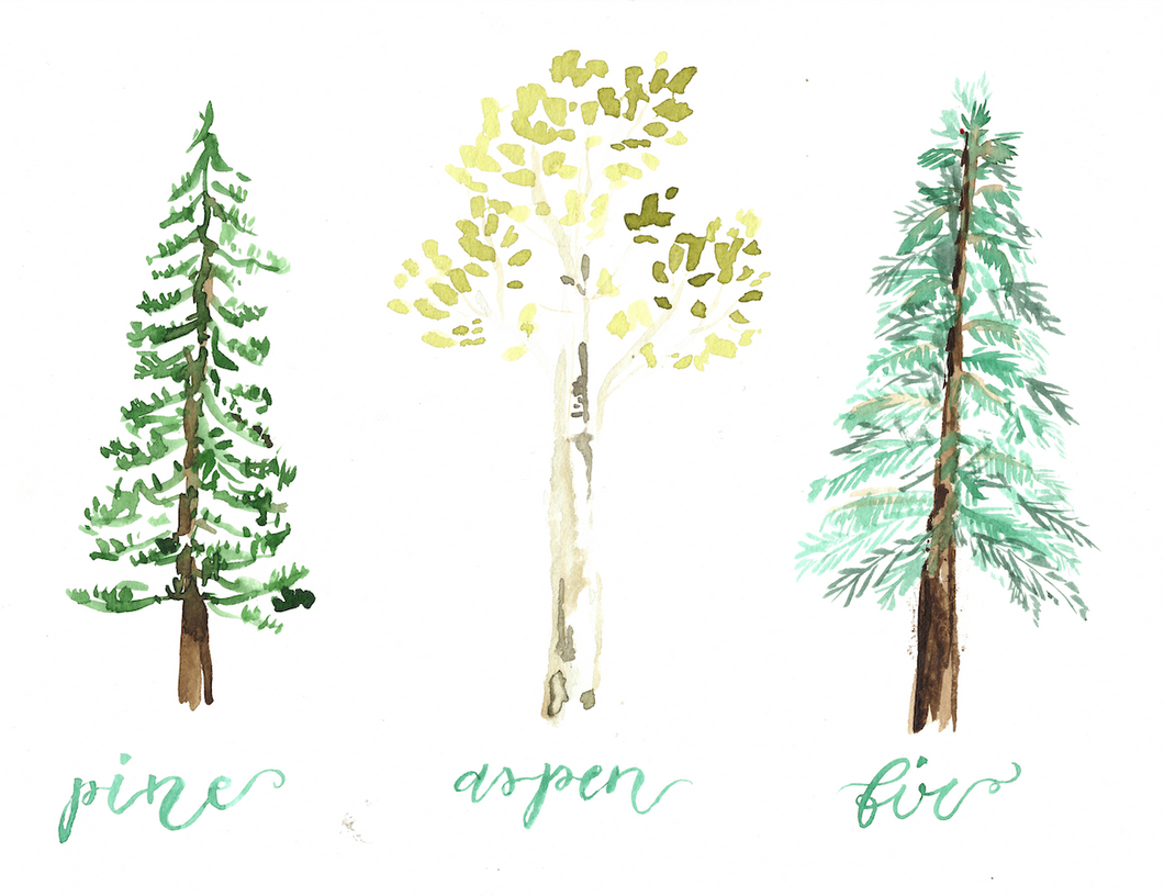 Watercolor print: Tree Species