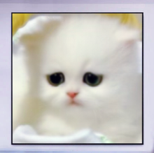 "Load image into Gallery viewer, ""#1 Kitten"""